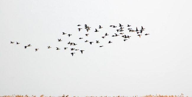 Ziua mondială a păsărilor migratoare - 10 Mai
