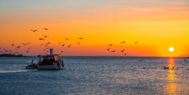 De ce să mergi la pescuit dimineața