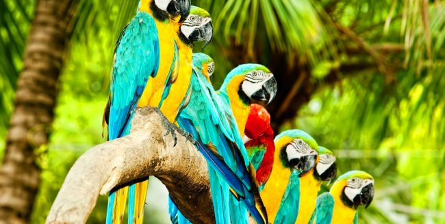 Curiozități despre papagali