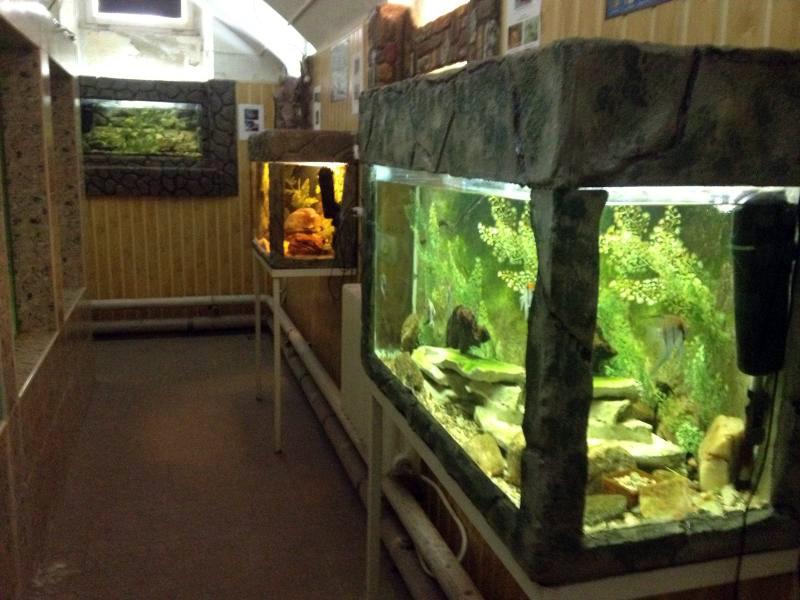 acvariul usamv