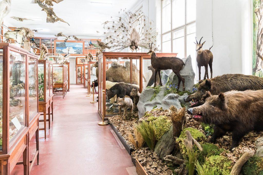 muzeul-zoologic-ubb-cluj