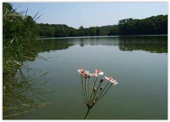 lacul valea rosie
