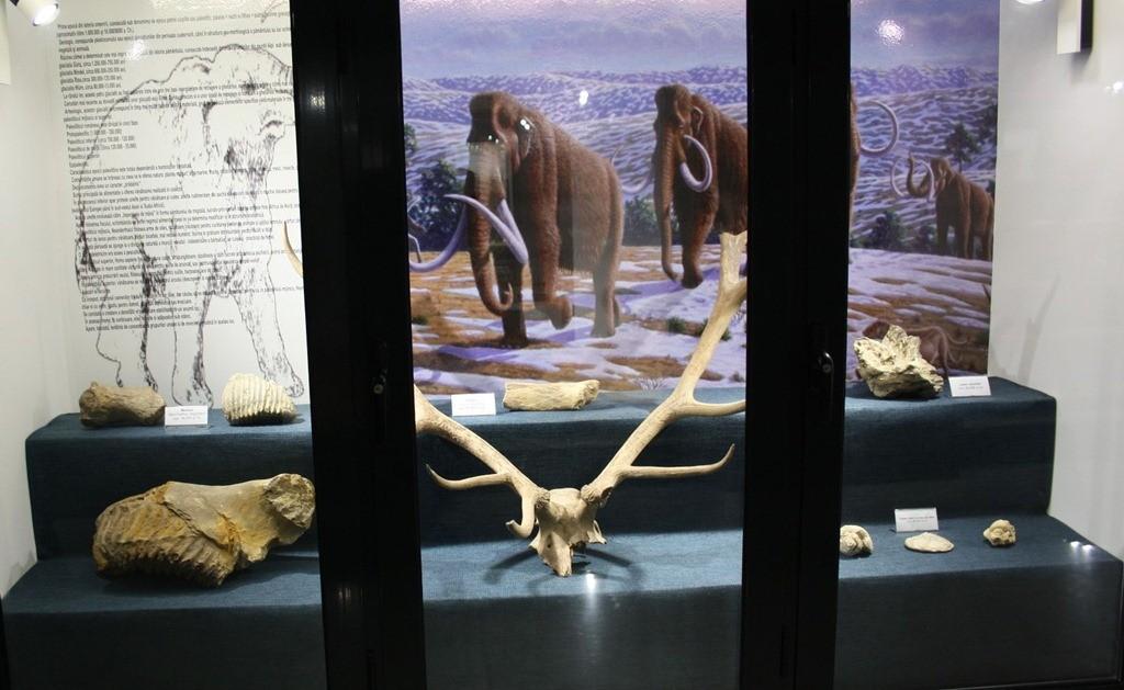 tezaur-arheologie-muzeul-dunarii-de-jos-calarasi-02