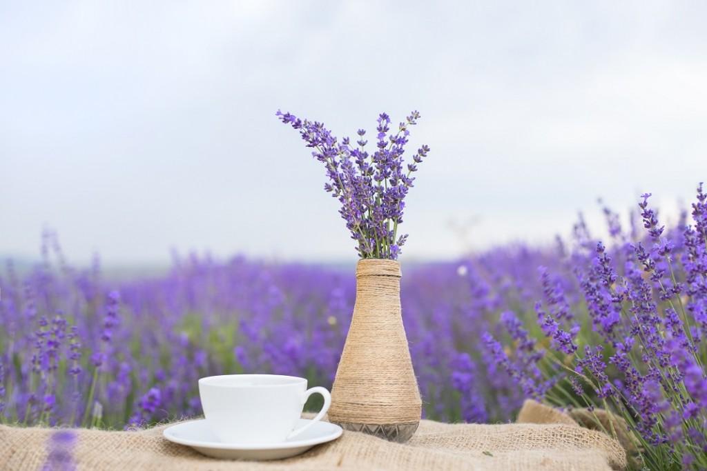 ceai-de-levantica_41588652