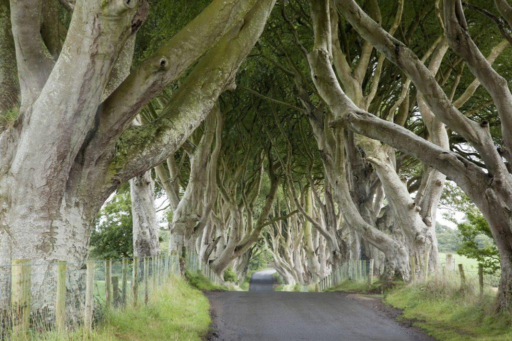 dark-hedges-irlanda_52339622