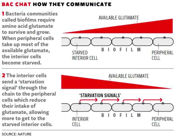 web-bacteria-graphic