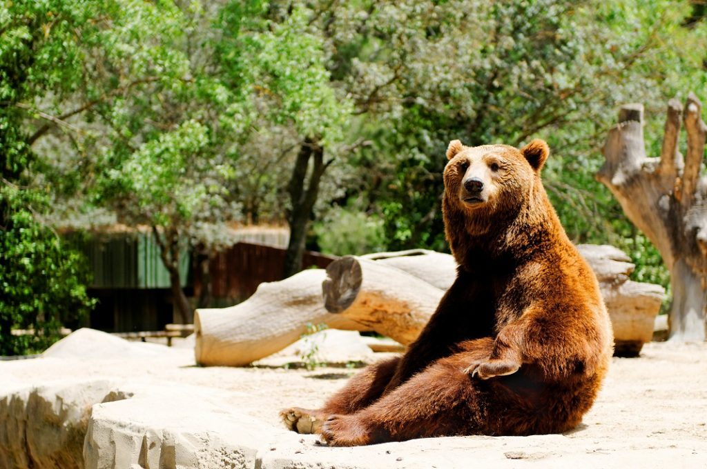 urs-brun-zoo_17792835