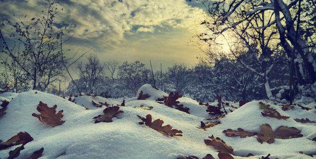 Citate despre iarnă