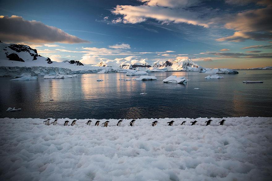 pinguin 2