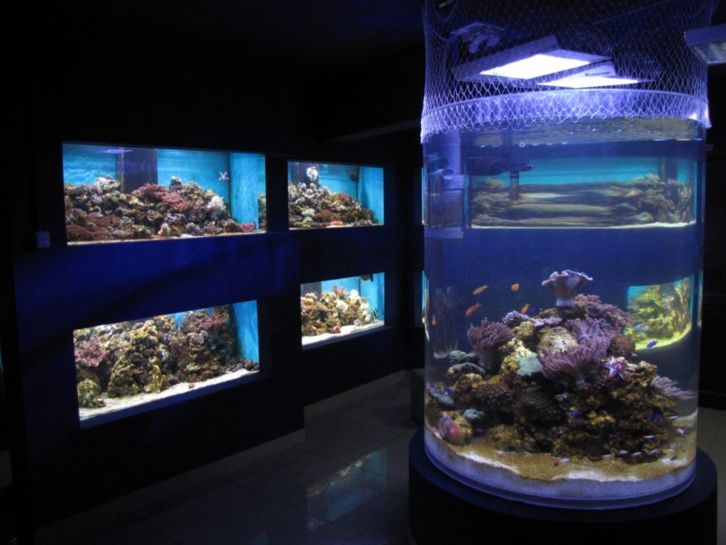 Centrul-Muzeal-Eco-Turistic-Delta-Dunarii-3