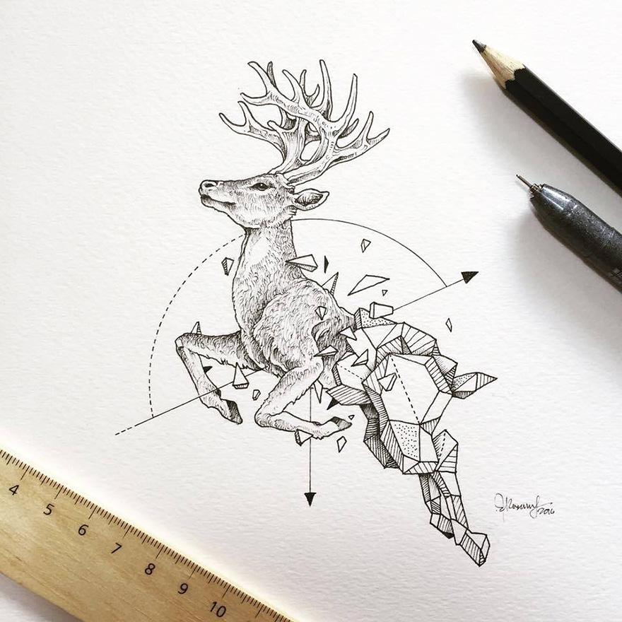 geometric-animal-drawings-wild-beasts-illustrations-kerby-rosanes-14__880