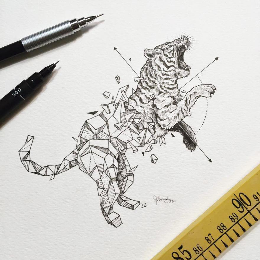 geometric-animal-drawings-wild-beasts-illustrations-kerby-rosanes-17__880