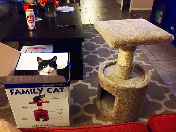 funny-gifts-for-cats-logic-28__605