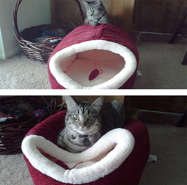 funny-gifts-for-cats-logic-351__605