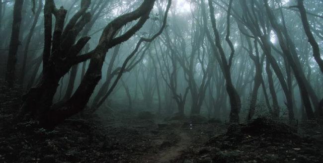 Clujul și legendele sale: Pădurea Hoia-Baciu