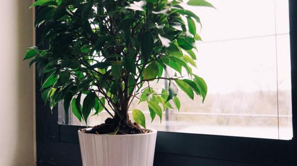 10 plante care îți purifică încăperea