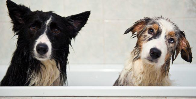 Momente în care câinii seamănă cu oamenii