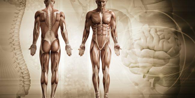 30 de curiozități despre corpul uman