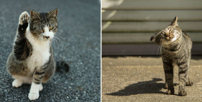 Fotografii haioase cu pisici ale străzii