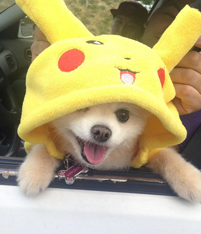 caine-haina-pokemon-go
