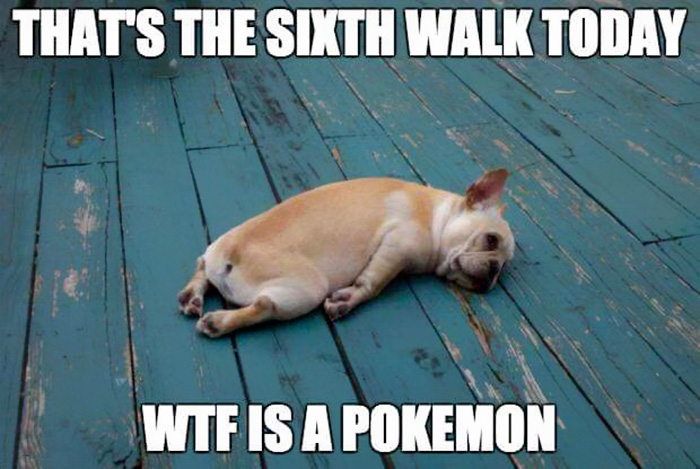 caine-obosit-dupa-vanatoarea-de-pokemoni