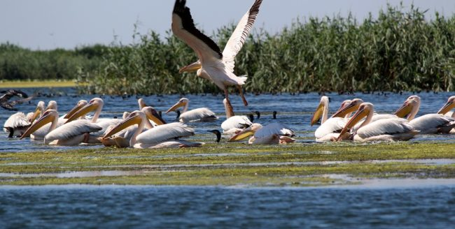 Zece motive să vizitezi Delta Dunării