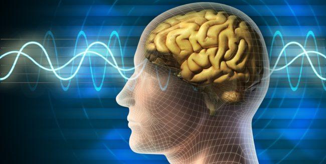 Curiozități despre creierul uman
