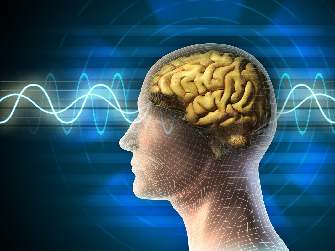 creierul-uman