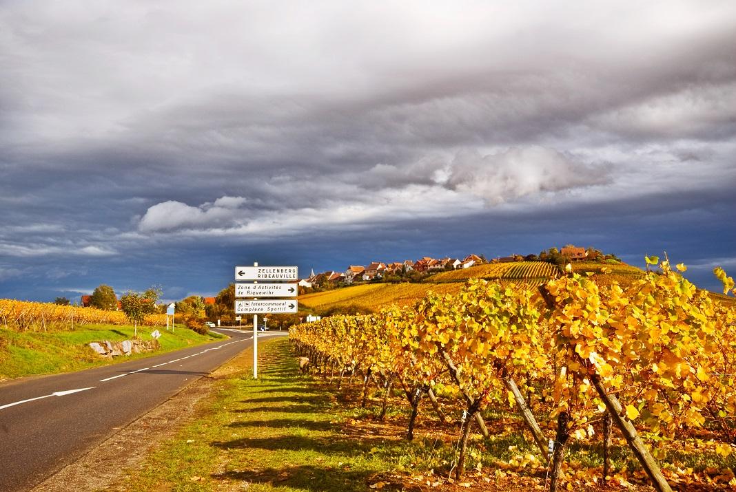 drumul vinului alsacia