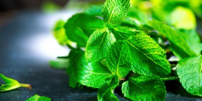 Beneficiile frunzelor de mentă pentru organism
