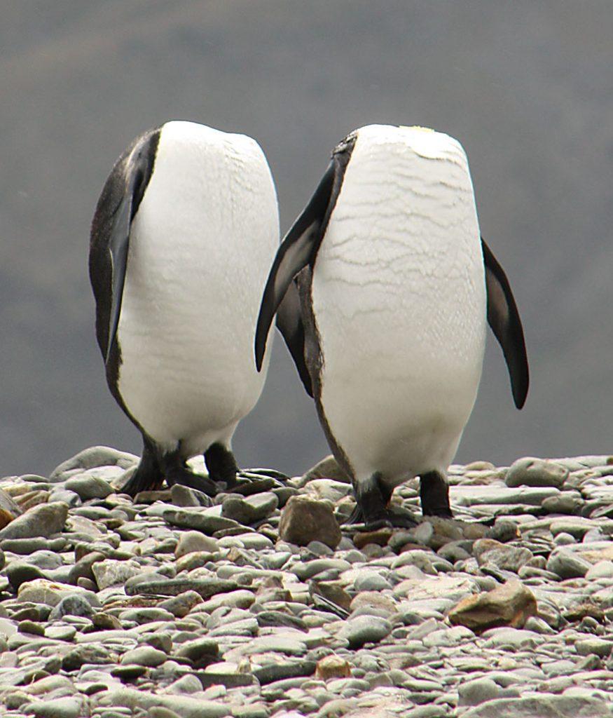 comedy-wildlife-photo-awards-shortlist-57fb4538734e1__880