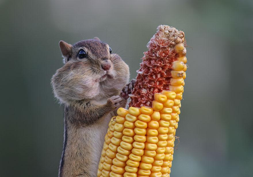 comedy-wildlife-photo-awards-shortlist-57fb45e4e42fa__880
