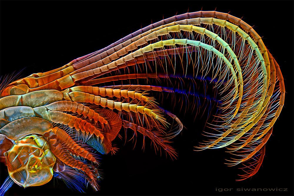 microorganisme văzute la microscop