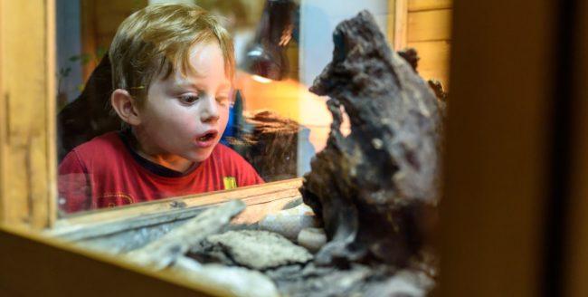 Peste 25.000 de clujeni, la Noaptea Muzeelor 2017